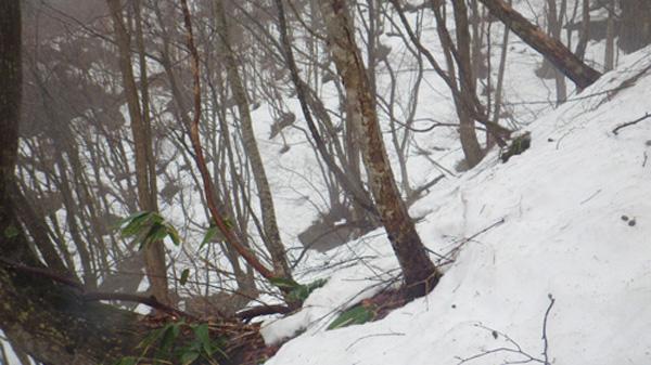 鯛の巣山登山5