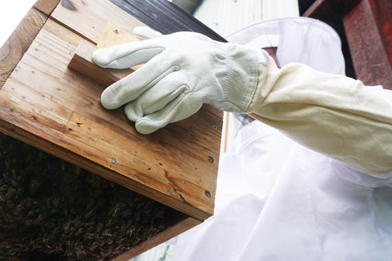 日本蜜蜂20180501
