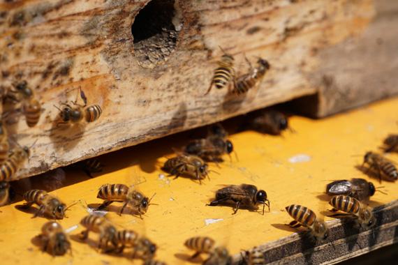 20180514蜂