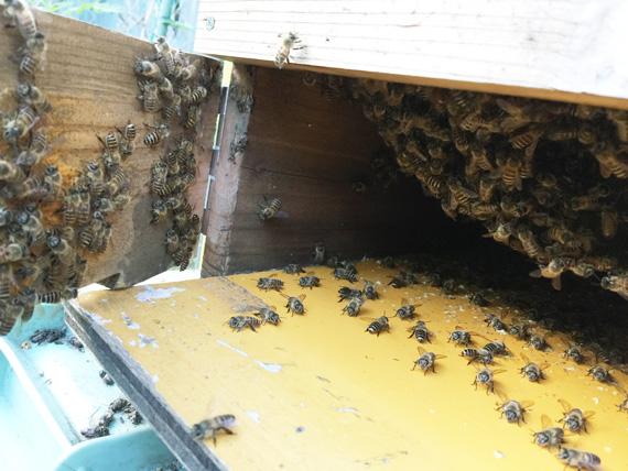 20180523蜂